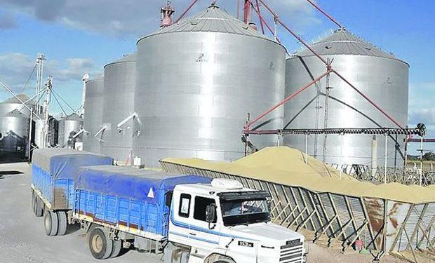 En cuanto al trigo pan, en el ciclo 2013/14 (noviembre a octubre) se procesaron 5,37 millones de toneladas.