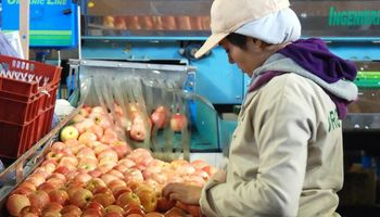 Advierten que el sector frutícola tendrá un año 'desfavorable'