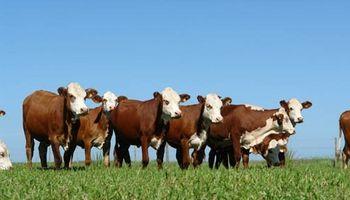 La primavera seca anticipa resultados deficitarios para la ganadería: qué postura toman los productores