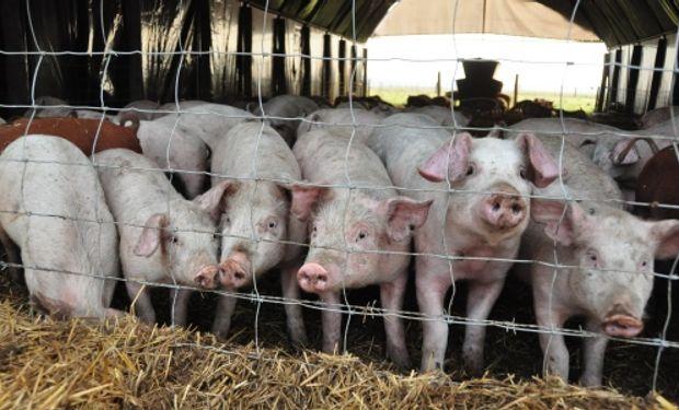 Asociados, cerdos y cultivos aumentan la competitividad.
