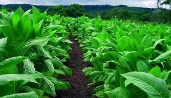 El sector tabacalero evalúa un proyecto para optimizar el Fondo Especial del Tabaco