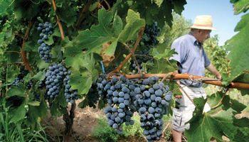 Elaboran un plan para reactivar la actividad vitivinícola