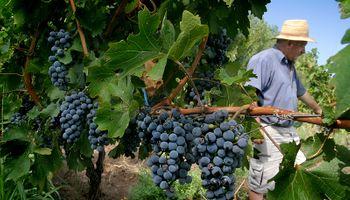 Grandes excedentes deprimen el precio del vino