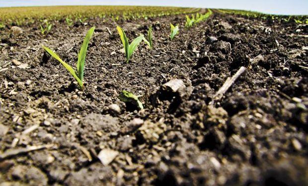 En maíz el dato de condición de cultivos estuvo por encima de la expectativa del mercado en la previa, lo que podría ser un factor bajista.