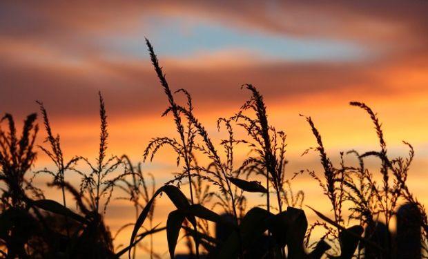Segunda rueda de subas para el maíz en Chicago.