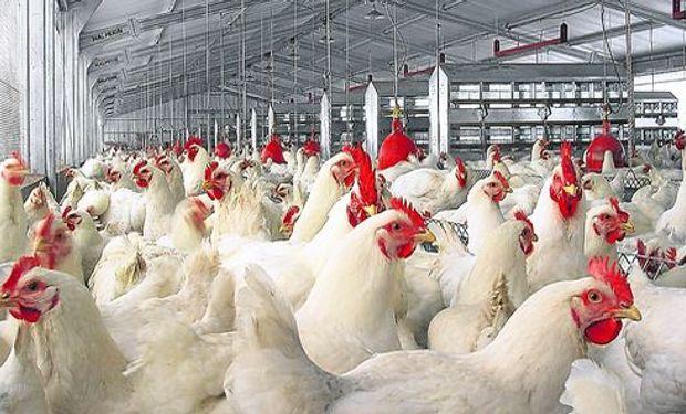 Entró en concurso la segunda productora de pollos del país