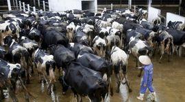 Por segundo año consecutivo, baja la seguridad alimentaria en el mundo