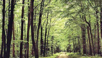 La deforestación obstaculiza frenar cambio climático