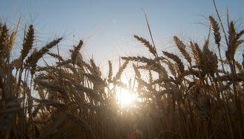 La sequía ya está instalada y el pronóstico del tiempo da otra semana sin soluciones: ¿Cuándo podría cambiar?