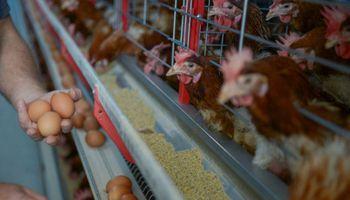 Semana Mundial del Huevo: qué rol tiene en la dieta y por qué se celebra