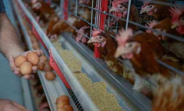 Semana Mundial del Huevo: el objetivo es difundir los beneficios de un alimento rico en nutrientes y muy fácil de preparar.