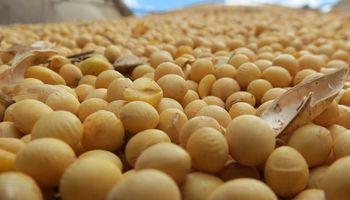 Alertan por faltantes de semillas para sembrar soja