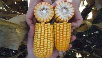 En medio de la pandemia garantizan el abastecimiento de semilla para la siembra de la campaña 2020/21
