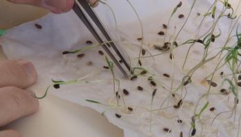 El rol del laboratorio de análisis de semillas en la cadena productiva
