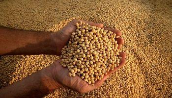 Proponen deducir el total del costo de semillas sobre el Impuesto a las Ganancias