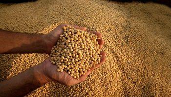 Buscan el aval del Gobierno para tratar una ley de promoción de semilla fiscalizada