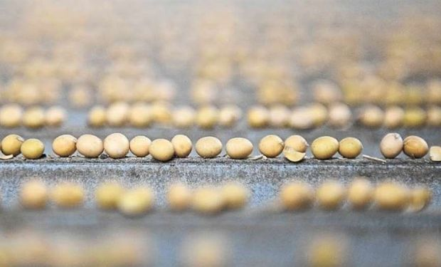 El análisis determina el tipo de daño en la semilla y determina el potencial germinativo.
