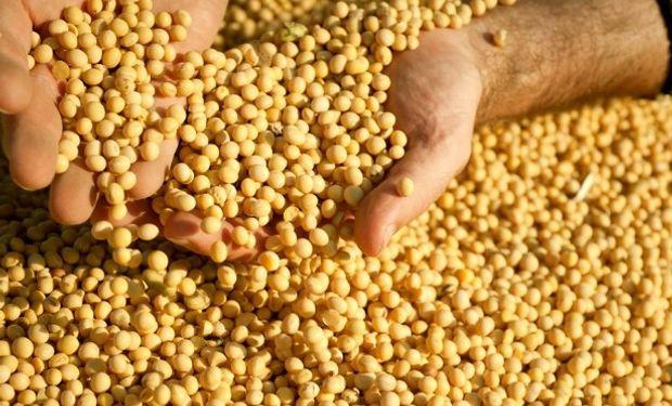 Complicado poder germinativo de la soja.