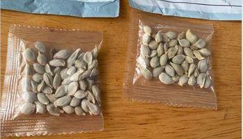 Misteriosas semillas que llegarían desde China ponen en alerta a varias regiones de los Estados Unidos