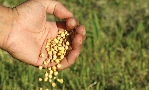Federación Agraria pidió al INASE que actúe porque el uso propio de semillas está en peligro