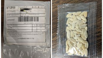 Alertan a productores por paquetes de semillas no solicitados: cómo proceder ante estos casos