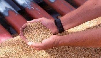 Lanzan software que permitirá a los semilleros ganar competitividad