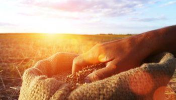 Comercialización de granos: una mirada estratégica