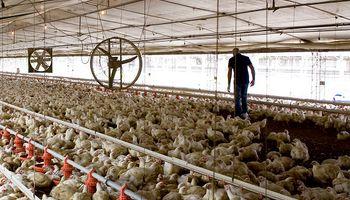 Masacre en la granja: acusan a dos menores de 10 y 12 años de matar 700 pollos
