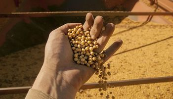 Comenzó a regir el nuevo sistema de certificación de productos de origen vegetal