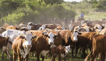 Se aprobó el Plan de lucha contra la garrapata bovina en Entre Ríos