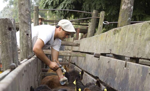 Bacterias resistentes: Argentina prohíbe el uso de colistina en animales para preservar la eficacia de su uso en humanos.