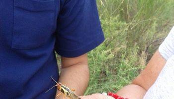 Agroindustria participó del Comité de Crisis por la plaga de langostas