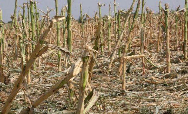 Tucumán pide que se homologue la Emergencia para productores de granos