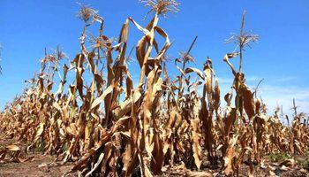 Emergencia Agropecuaria por sequía: marco normativo e impuestos