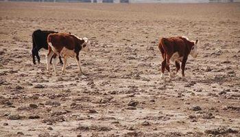 Declaran la emergencia agropecuaria en la provincia de Mendoza