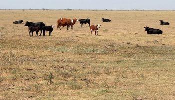 La Pampa aseguró que sus frigoríficos están preparados para exportar carne libre de coronavirus