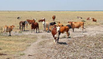Declaran la emergencia agropecuaria en Chaco y Catamarca