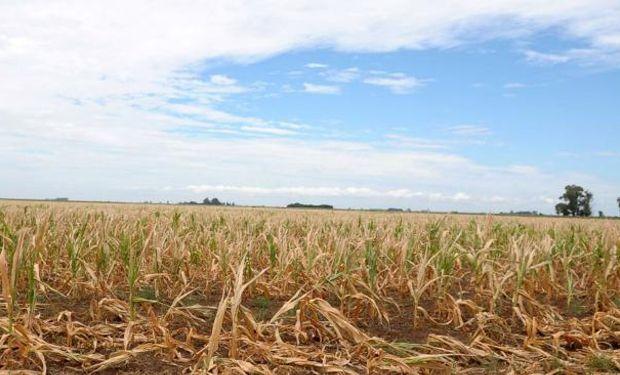 El NOA soporta la sequía más importante de los últimos 50 años