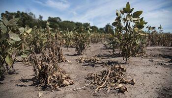 Acordaron solicitar la declaración de emergencia agropecuaria en Santa Fe