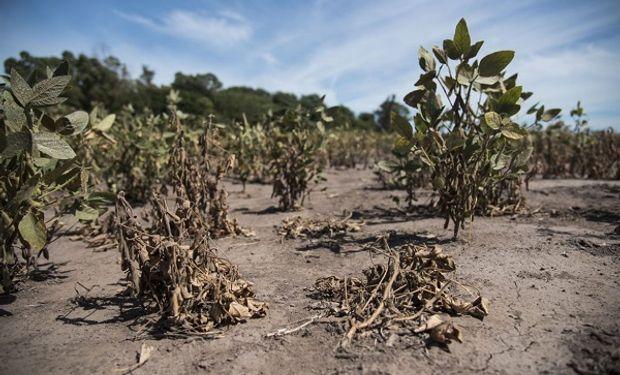 La sequía es un fenómeno que afecta a todo el país.