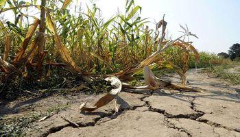 Las condiciones climáticas extremas pusieron a Santa Cruz y Misiones bajo emergencia agropecuaria