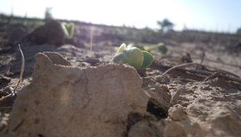 Predominan las áreas secas en el territorio nacional