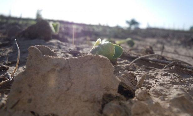 La mayoría de los suelos se encuentran con sequía, principalmente la zona centro