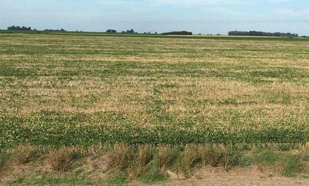 La sequía está generando estragos y los productores recurres a diferentes alternativas para cambiar su suerte.