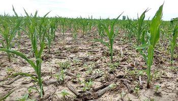 Seguros agrícolas: el Estado analizará cómo bajar los costos para productores