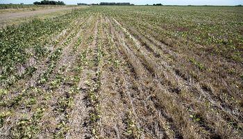 Sorpresa por la falta de datos oficiales sobre el alcance de la sequía