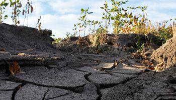 Federación Agraria solicita asistencia ante la sequía