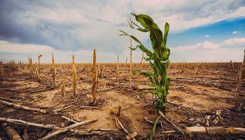 Sequía histórica en Brasil: con cinco estados bajo alerta, enfrentan la peor racha de lluvias en 91 años