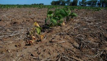 Podría llegar hasta US$ 2.800 millones la pérdida por la sequía