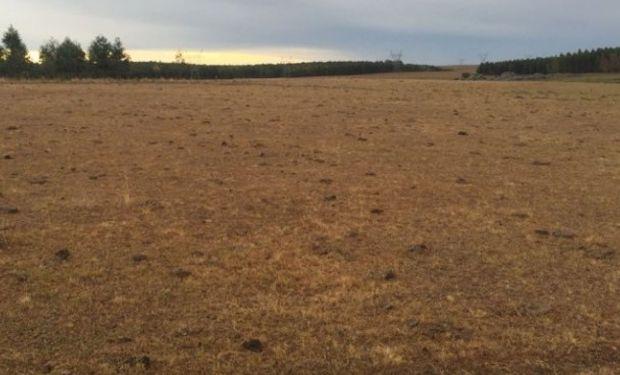 """""""Hay menos granos para reservas y fibra. Va ser un 2018 muy largo tanto para la ganadería como la lechería"""", dijo el ingeniero agrónomo Esteban Hoffman"""